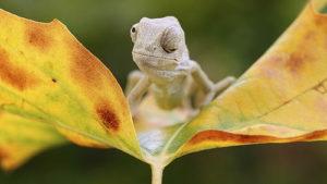 Ящерицы тоже бывают милашками
