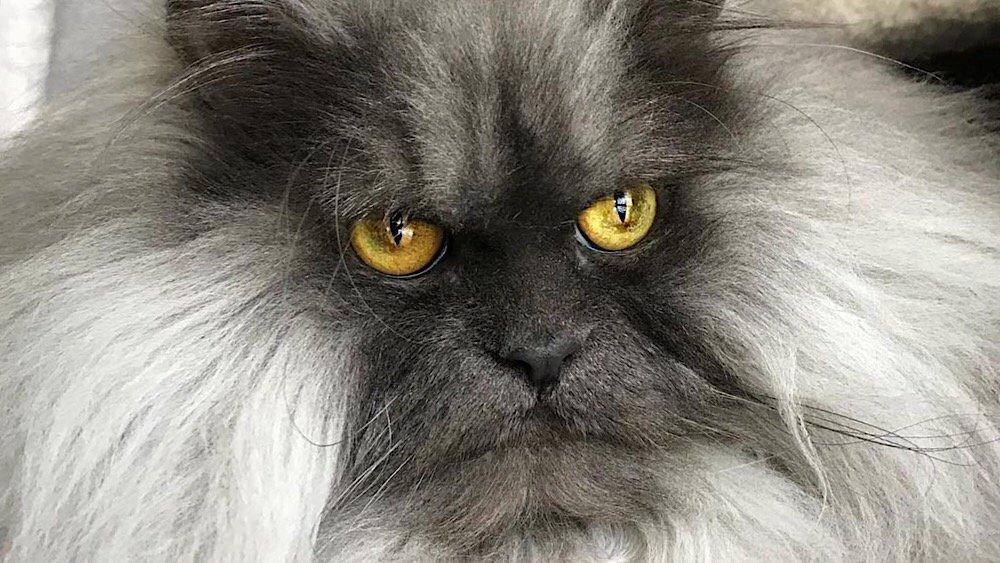 Вечно недовольный кот стал з…