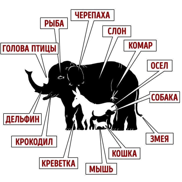 сколько животных видишь на картинке ответ длину, остановитесь
