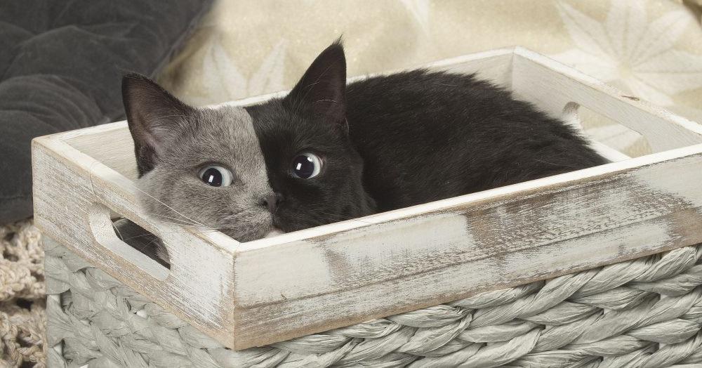У кота по кличке Нарния есть…