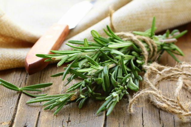 «Женская трава». Что лечит мелисса? | Здоровая жизнь