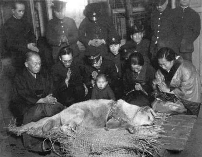 Хатико перед его похоронами в 1935 году