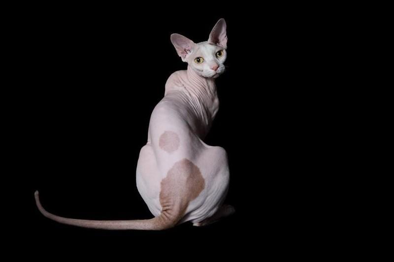 него есть картинки с изображением котика сфинкса шины пластика профили