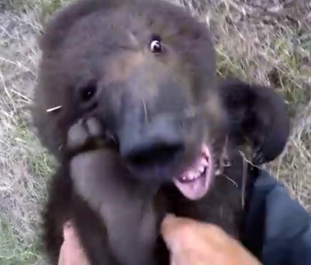 Он решил, что можно безнаказанно щекотать пятки медведю гризли. Вот, что из этого получилось