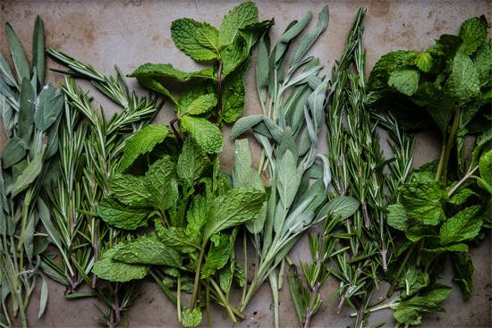 Как использовать остатки свежей зелени