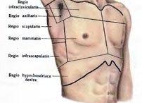 Топ-8 «лишних» органов в организме человека здоровье,медицина,наука,организм,человек