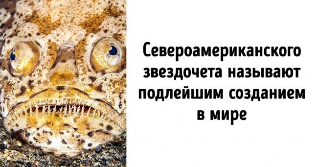 10обитателей мирового океана, каждый изкоторых могбы исполнить главную роль вфильме ужасов