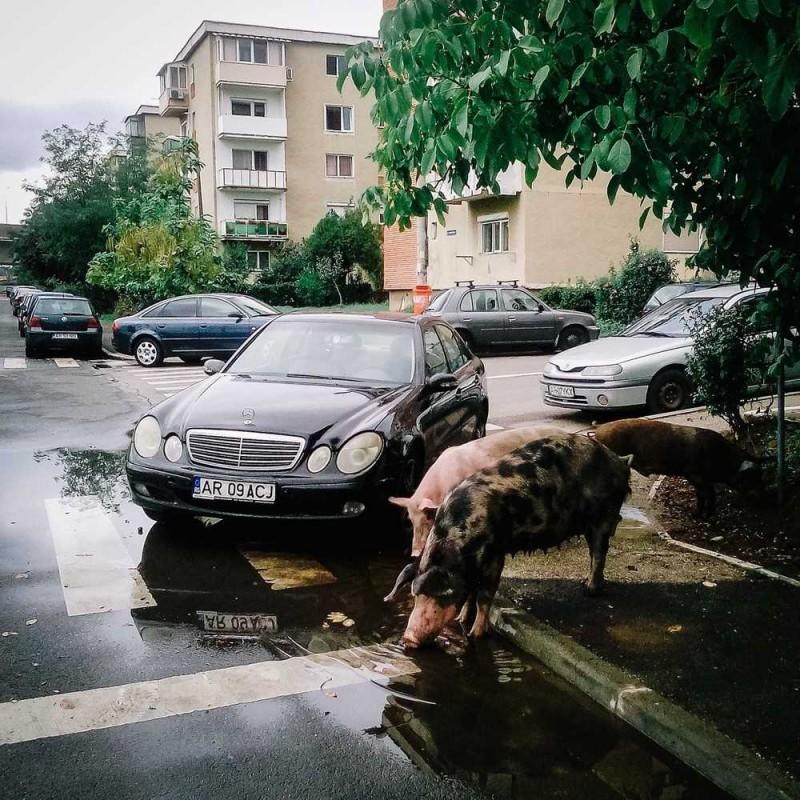 Эти фотографии показывают всю красоту и печаль Румынии