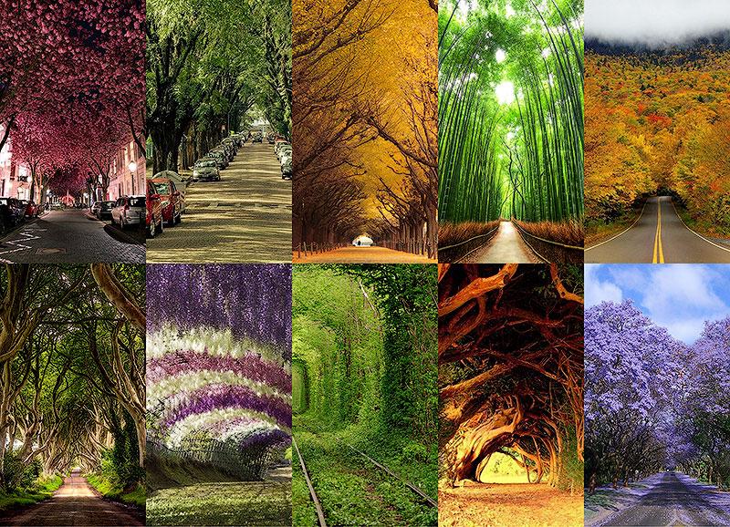 10 самых красивых тоннелей из деревьев в мире
