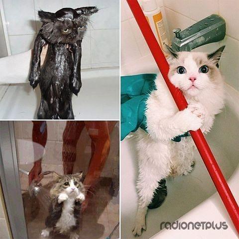 Свежевымытые котики :)