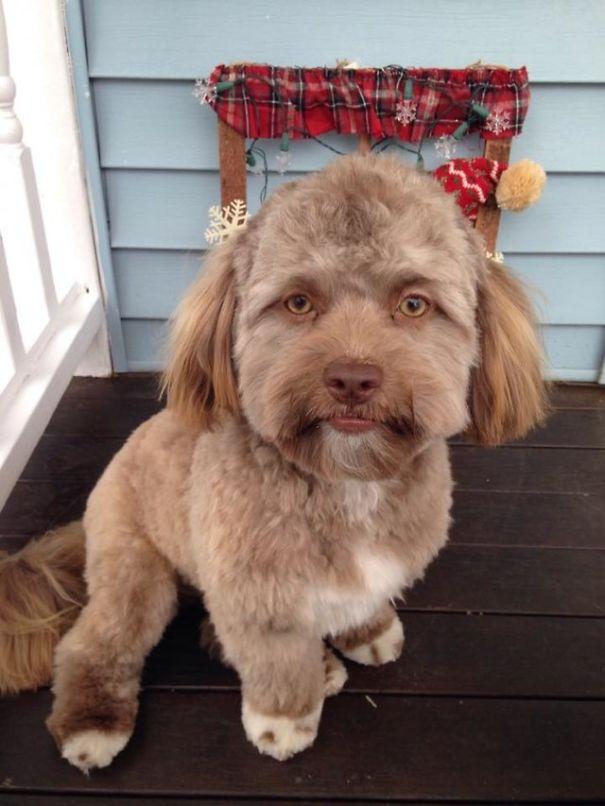 Собака с необычным лицом – только взгляните!