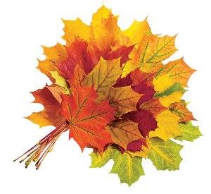 Моя лучшая осень