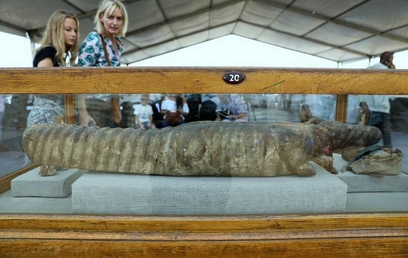 . ..крокодиловый саркофаг ... Египт, в мире, гробницы, кошки, мумия, находка, пирамиды