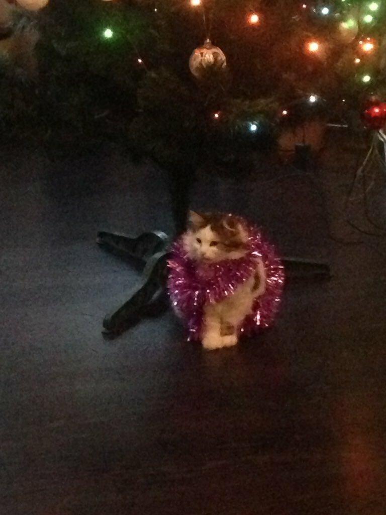 Нарядили елка, игрушки, кот, новый год, разбой