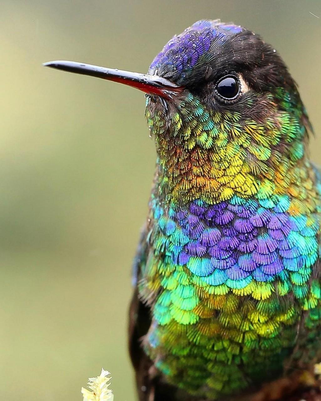 поклонница картинки красочных птиц финале статья википедии
