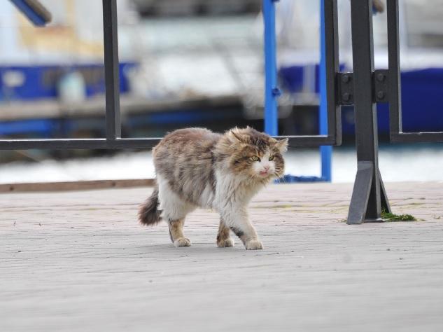 «Чудо бывает»: потерявшегося на Дальнем Востоке кота опознали в Таджикистане