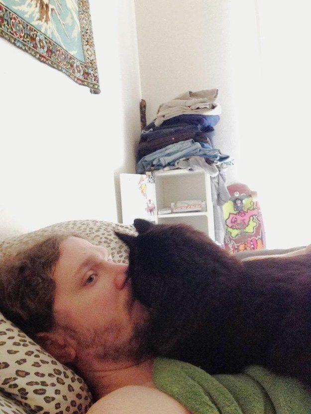 20 доказательств того, что кошка худший сосед по комнате