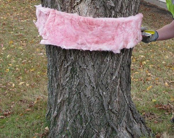 Спасаем деревья от вредителей дачнику на заметку