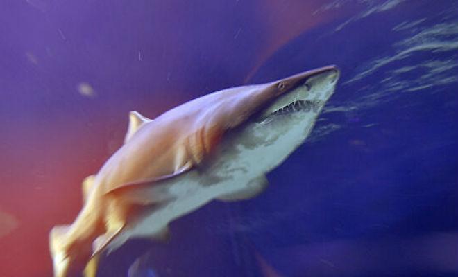 Дайверы погрузились на самое дно и нашли в пещере стаю спящих акул