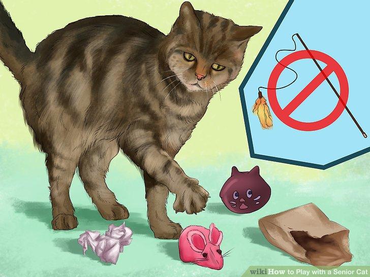 КОШКИН ДОМ. Игры и игрушки для котят и кошек
