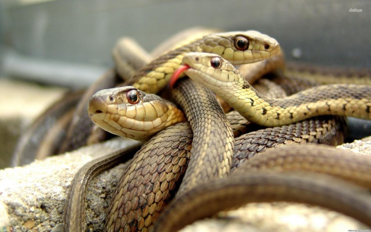 Мужчину покусало 37 змей. После чего он сутки полз по лесу, чтобы добраться до людей