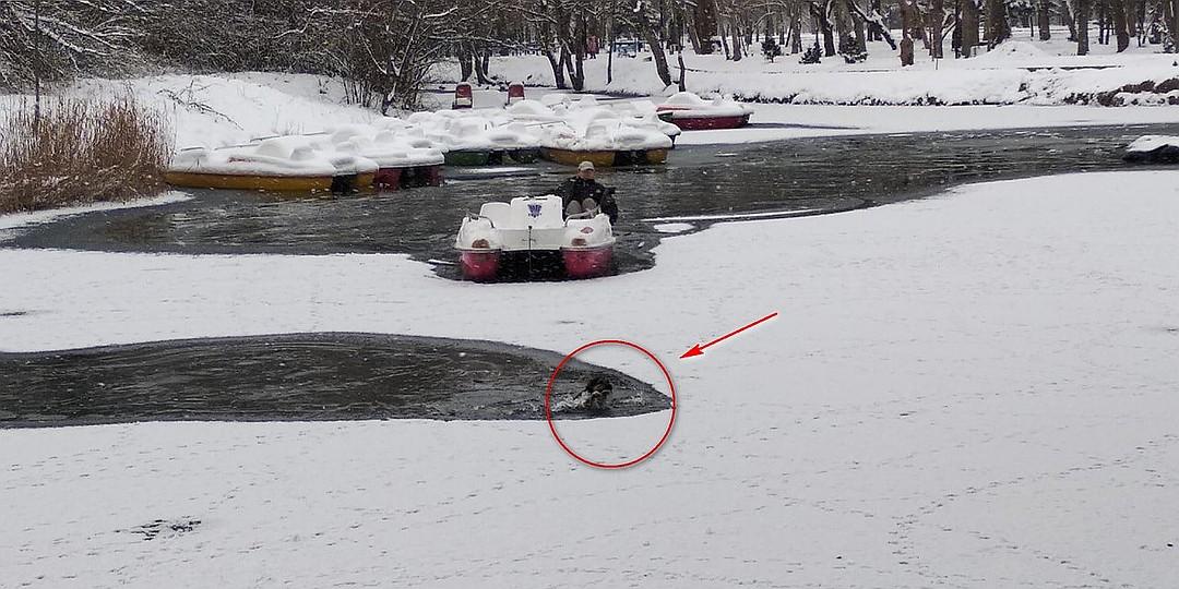 Чтобы добраться до тонущего животного, пришлось пробивать лед с помощью катамарана. Фото: Леонид Карпов