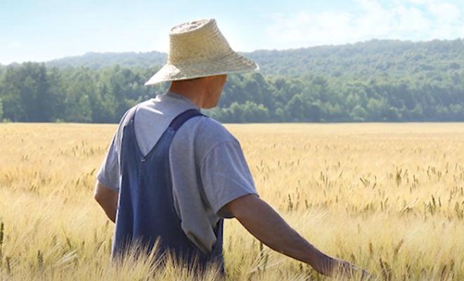 Миллионер отвез сына к фермеру, чтобы преподать урок, но подросток в итоге сам научил отца жизни Культура