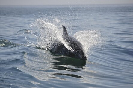 Насколько опасен дельфин в открытом море: вся правда для туристов