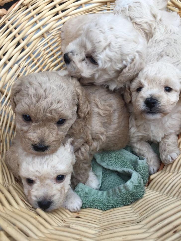 20+ собак, милых настолько, что сразу хочется завести пушистого друга