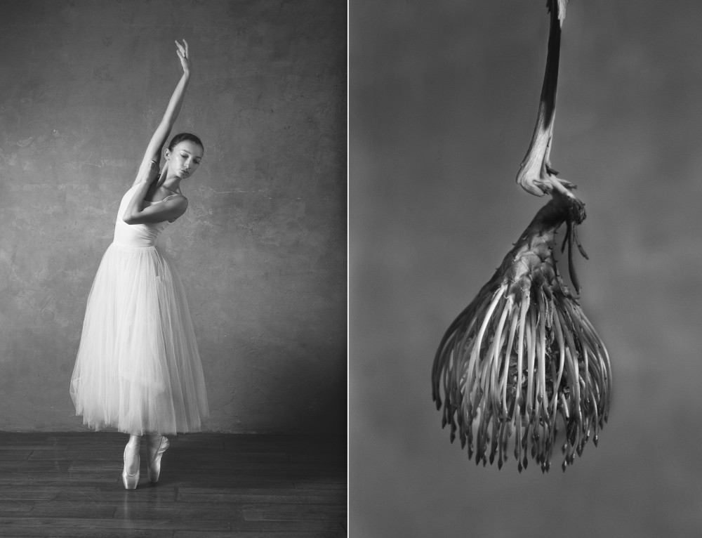 «Балерина и цветы» – серия о сходстве двух изяществ балет,интересное,фотография,цветы