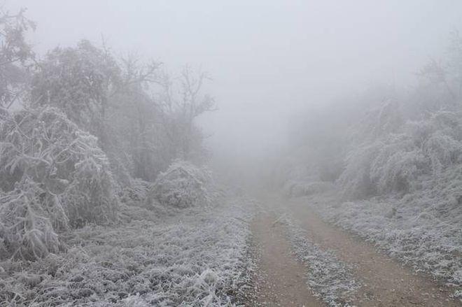 Смертельный ледяной туман, от которого надо бежать без оглядки моментально, Иногда, растенияЛес, среагировать, опасностьТакой, туман, зовут, «Белая, смерть»В, температура, опускается, гибнут, животные, пригорода, просто, Пилиша, мертвой, зоной, Замерзли, насмерть