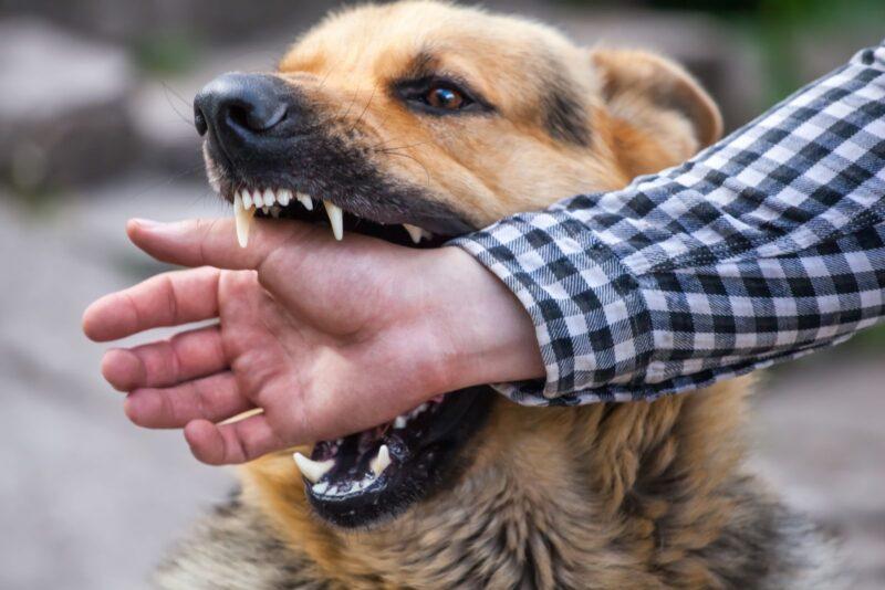 10 распространенных мифов обешенстве, вкоторые пора перестать верить болезни,животные,здоровье,медицина,мифы,собаки