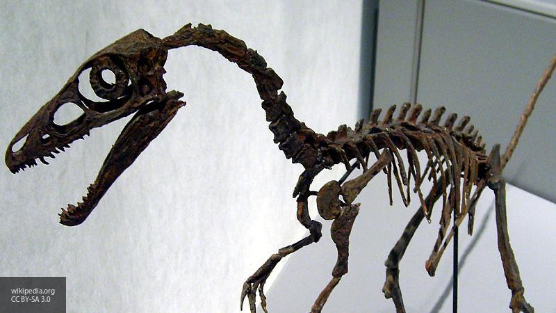 Ученые нашли в окаменевшем динозавре неизвестную науке ящерицу