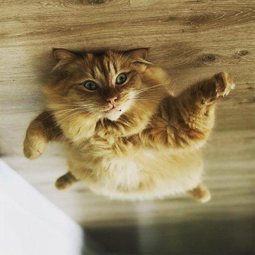 Если б кошки могли парить под потолком, как воздушные шарики