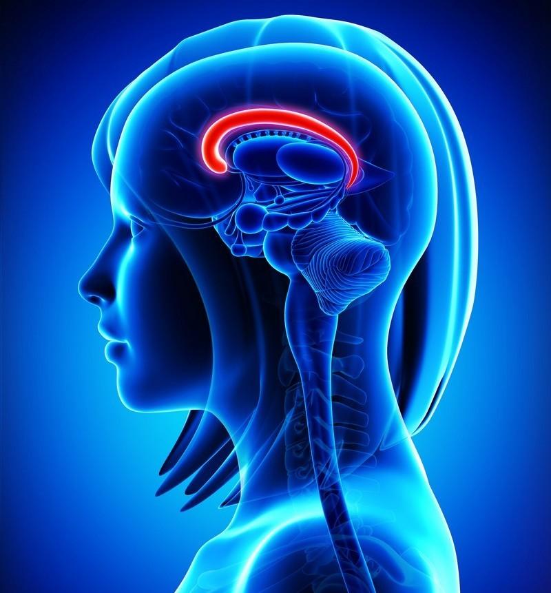 7. Мозолистое тело в женском мозгу толще, чем у мужчин, и в нем на 30% больше соединений. Именно поэтому женщины лучше справляются с многозадачностью. женщина, интересное, тело, факты