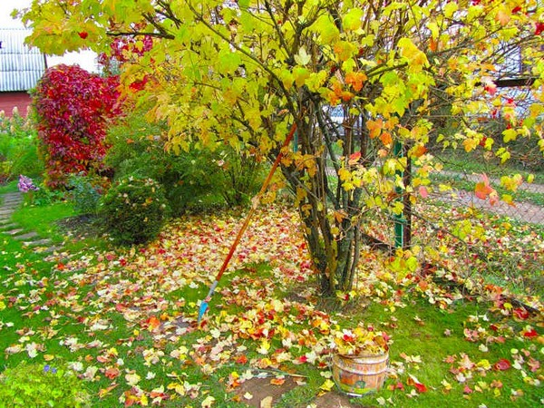 Осенние работы на даче и участке