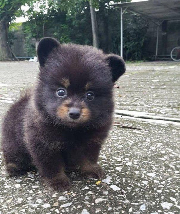 Looks Like The Woodland Critter Christmas Bear
