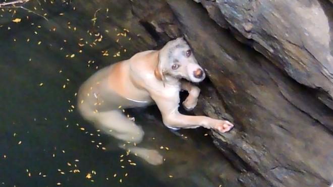 Чудесное спасение отчаявшейся собаки, упавшей в глубокий колодец
