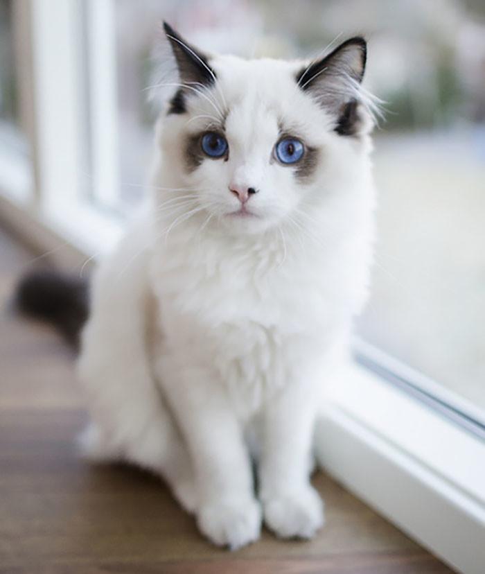 неплохие картинки котов самые красивые прошли как краевом