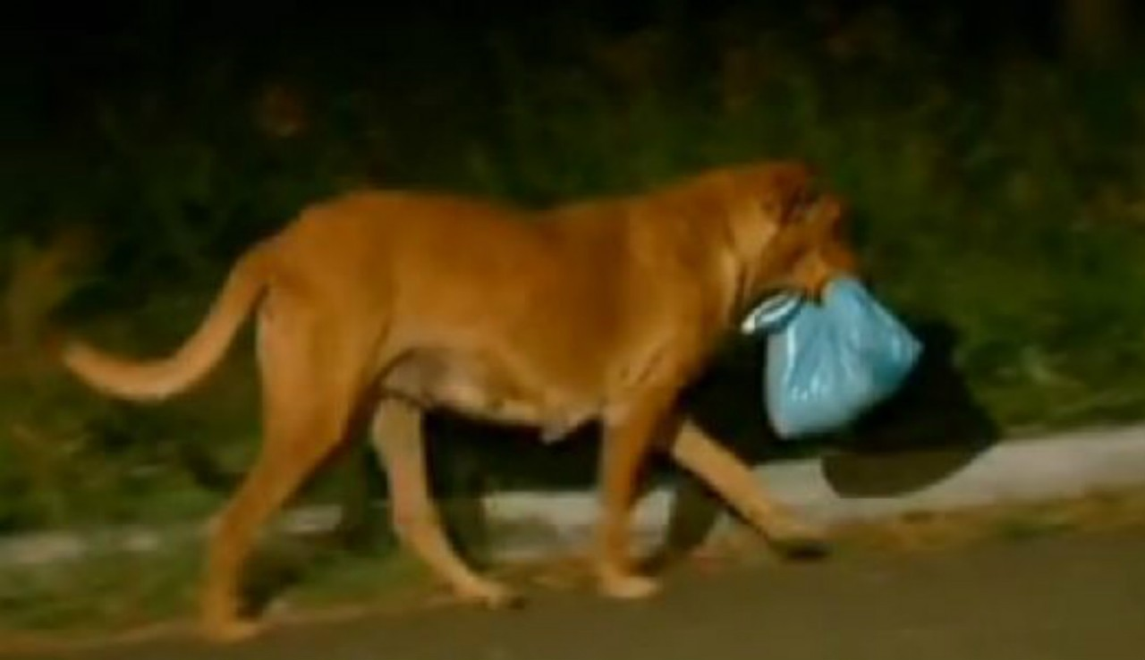 Даже собаки умеют помогают д…