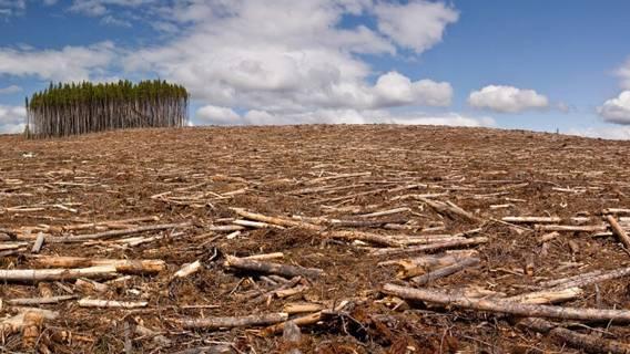 Китайские банки обвинены в спонсировании вырубки лесов по всему миру