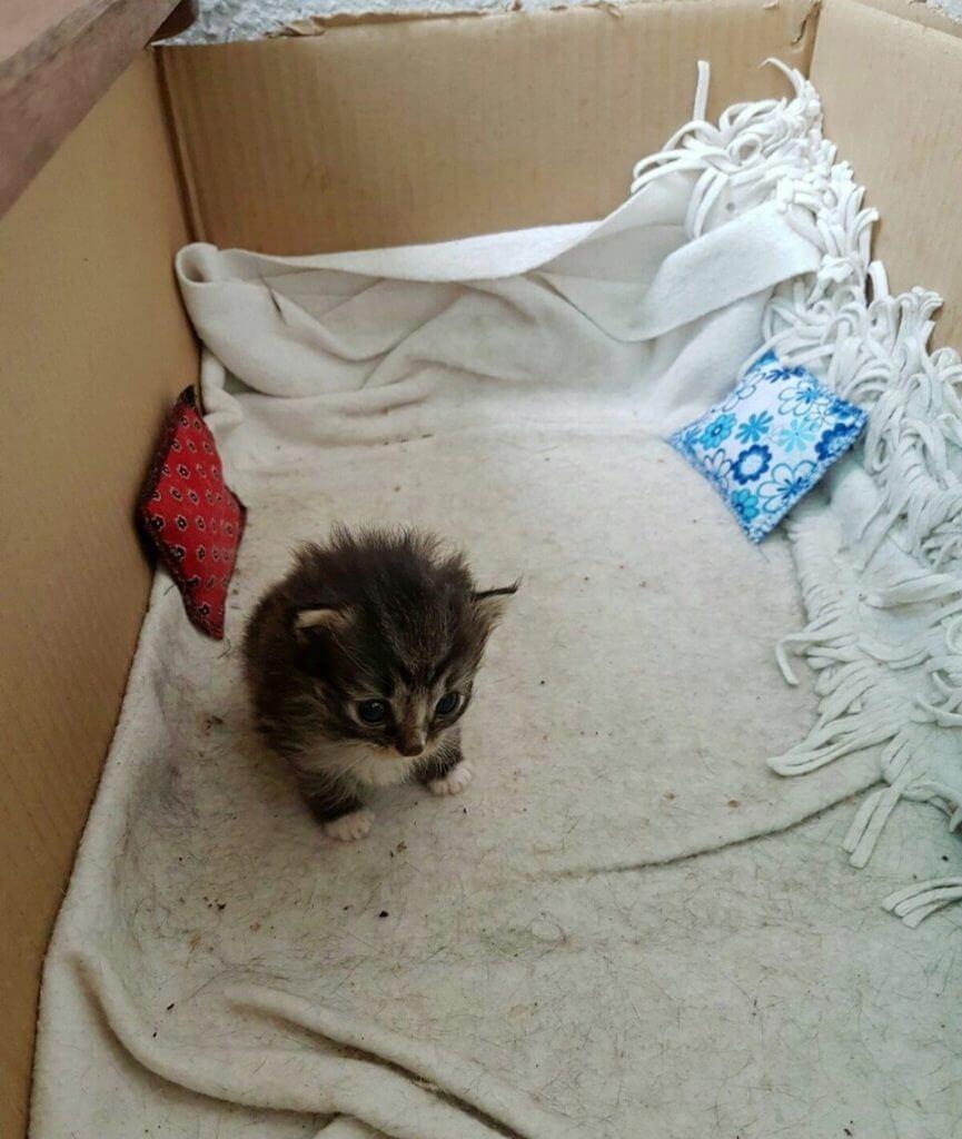 Она кормила бездомную кошку,…