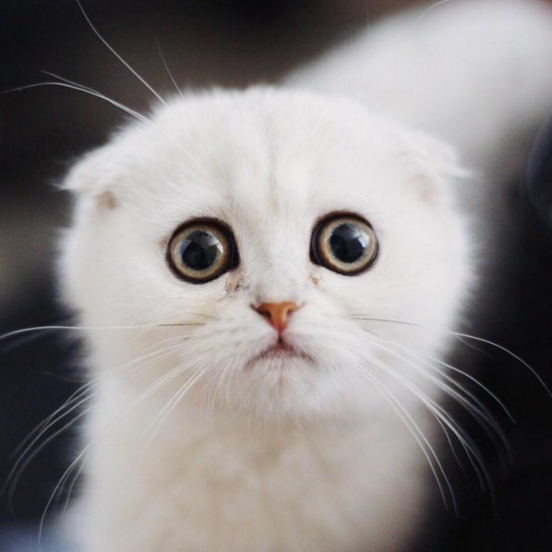 этом картинка с грустными глазами котенка еще кухня катара