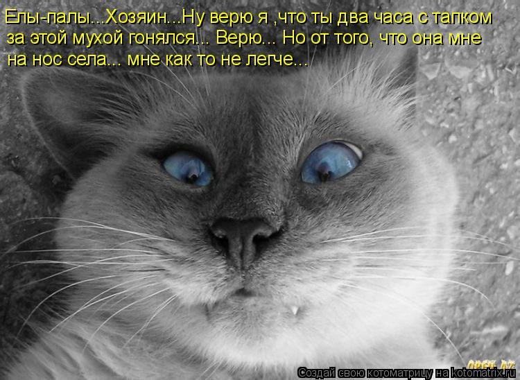 Уморительные истории о котах)))
