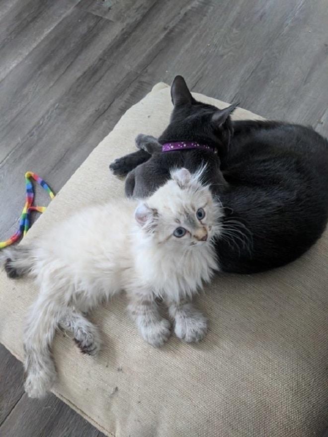 Коты на стуле