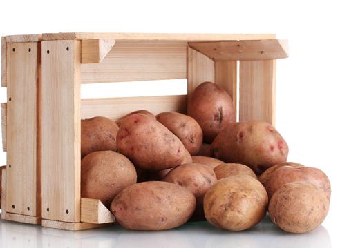 450 килограммов картошки из одной сотки!