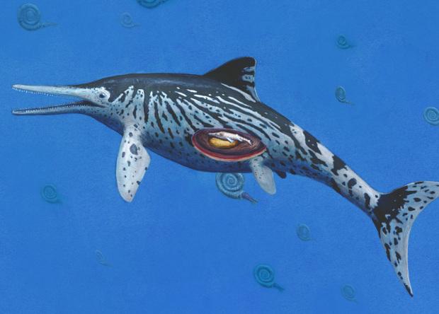 Крупнейший представитель рода ихтиозавров оказался беременной самкой