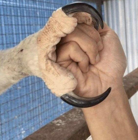 Когти орла