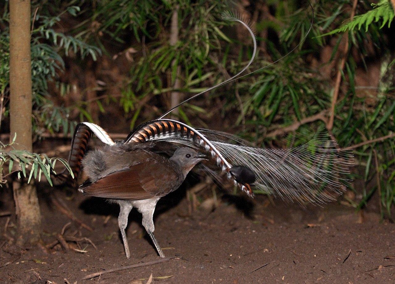 Животные и птицы австралии картинки с названиями координатные