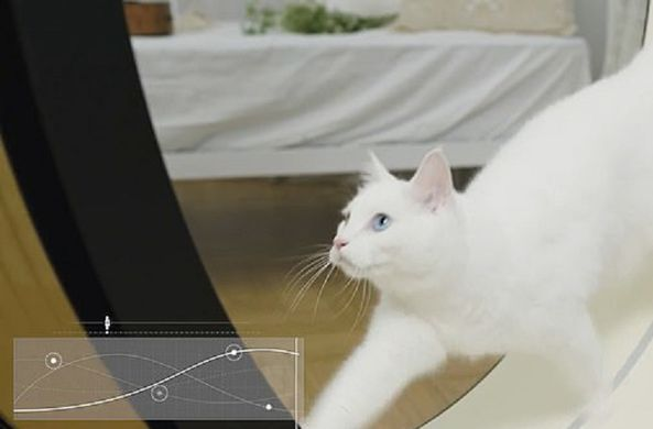 В Корее разработали специальный тренажер для котов